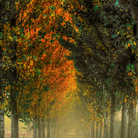 foggy autumn in the park by Cornelius D - City,  Street & Park  City Parks