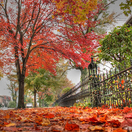Autumn Leaves by Anthony Preston - City,  Street & Park  Neighborhoods ( autumn, colors, fall, leaves, city street, color, colorful, nature )