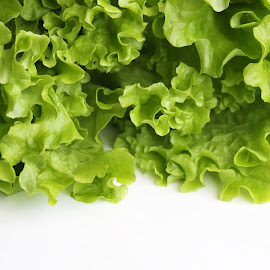 Lettuce by Vita Pundure - Food & Drink Fruits & Vegetables ( salad, isolated, diet, decorative, green, vegetables, white, leaves, close up, macro, nutrition, organic, vitamins, groceries, food, lettuce, background, ecology, eco,  )