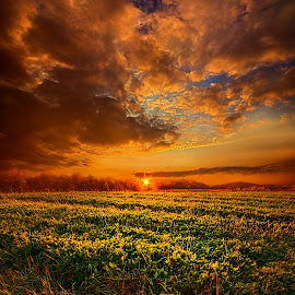 Every Step of the Way by Phil Koch - Landscapes Sunsets & Sunrises ( vertical, photograph, bench, blue   sky, fine art, yellow, travel, leaves, love, sky, nature, tree, autumn, trail, picnic table, light, flower, orange, twilight, agriculture, horizon, portrait, environment, dawn, serene, outdoors, trees, wild   flowers, floral, natural light, wisconsin, ray, landscape, phil koch, sun, photography, path, horizons, office, clouds, park, green, back light, scenic, morning, ferns, shadows, field, red, blue, color, sunset, peace, fall, meadow, landscapephotography, beam, earth, sunrise, landscapes, hike, mist )