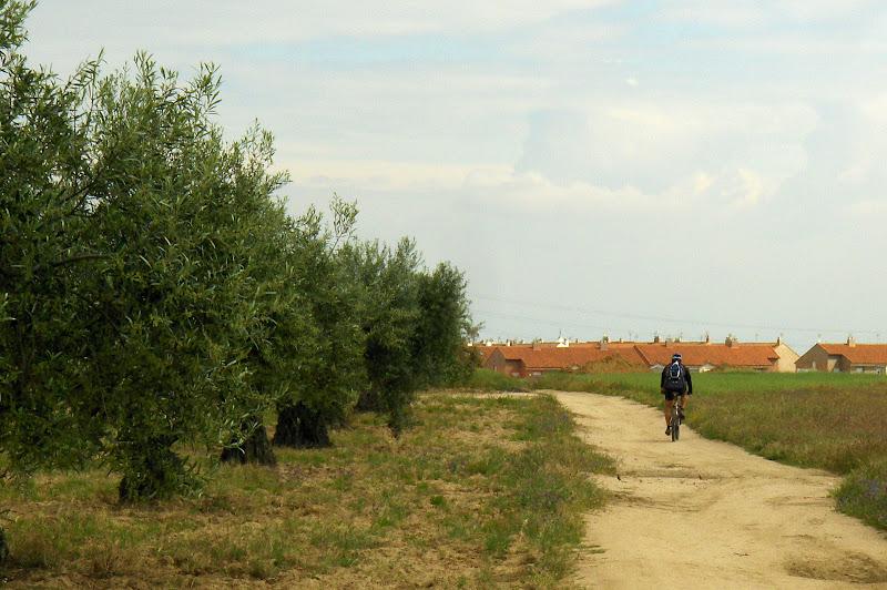 olivares en Illescas