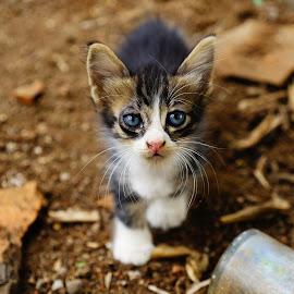 kitty-kity by Ugin Son Priyadi - Animals - Cats Kittens
