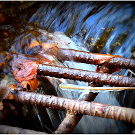 Leaves on  A Drain by Denny Paul - Abstract Patterns ( water, color, fall, leaves, drain )