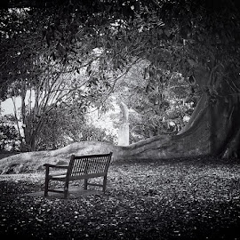 Absent_Viewer by Jim Merchant - Landscapes Forests ( bench, shadow, fig tree, leaves, light )