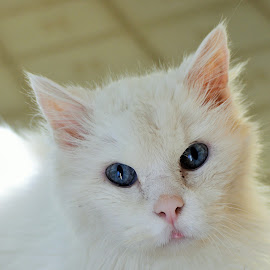 Casper by Jennifer Schweitzer-Bell - Animals - Cats Portraits ( cats, photography )