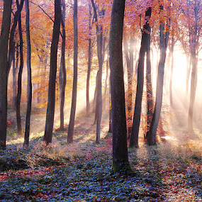 Woodland Beauty by Ceri Jones - Landscapes Forests ( season, tree, autumn, su, oxfordshire, woodland, morning, woods, rays )