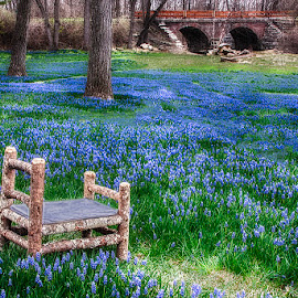 Spring at Lockridge Furnace by Betsy Wilson - Artistic Objects Furniture ( grape hyacinth, alburtis, lock ridge, lockridge furnace, flowers, spring, Chair, Chairs, Sitting )