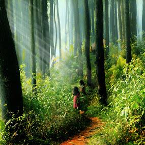 by Ymmot Davinci - Landscapes Forests
