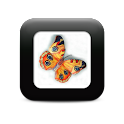 Colorful Butterfly Tattoos icon