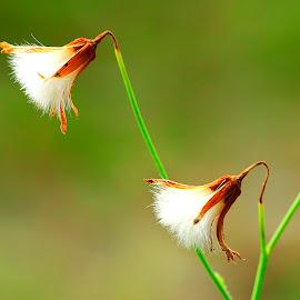 bunga rumput by Wartono Kumpulono - Nature Up Close Other plants