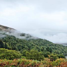 Scotch Mist by Shona McQuilken - Landscapes Weather ( water, scotland, hills, bushes, fog, green, trees, lake, loch, mist )