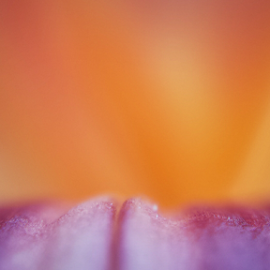 Sunset Sky Shadowbox by Don Teachout - Abstract Macro ( abstract, macro, lily, sunset, flower )