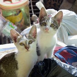 portrait my meow by Adeep Jali - Animals - Cats Portraits