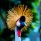 Burung4.jpg
