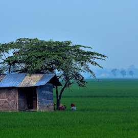 Saung by Max Bowen - Landscapes Prairies, Meadows & Fields