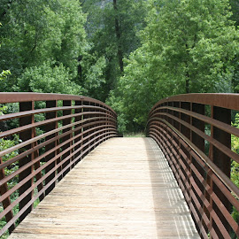 Bridge of Dreams by Donna Chapman-Domitrek - Landscapes Travel ( woodlands, peaceful, arizona, forest, bridge,  )