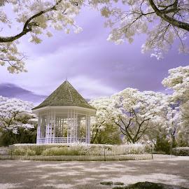 Gazebo by Tina Lim - City,  Street & Park  City Parks ( infrared, trees, singapore botanical gardens, garden, gazebo, shadows )