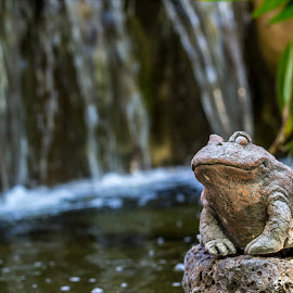 Froggy Falls by Paul Cushing - Nature Up Close Water ( water, frog, waterfall, landscaping, pond )