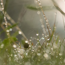 Waterdrops on the grass an early morning by Stine Engelsrud - Nature Up Close Leaves & Grasses ( rsa_macro, _rsa_nature, rsa_sky, rsa_light, rsa_water, rsa_ladies, royalsnappingartists, naturehippys, nature_obsessed, nature_perfection, nothingisordinary, ahd_photo, team_of_all, photomafia, ptk_nature, phototag_nature, instatements, ig_circle )