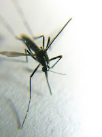 Screenshot of Mosquito Sounds --3D--