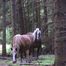 by Marta Moro - Animals Horses (  )