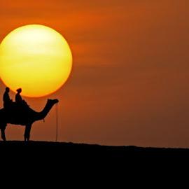 Fireball by Pradyuman Samant - Landscapes Sunsets & Sunrises ( camel, frame, sky, desert, sunrise )