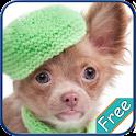 Chihuahua+ Free