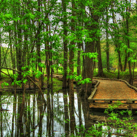 by Dipali S - Landscapes Forests ( green, creek, summer, trees, forest, bridge,  )