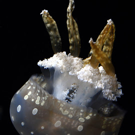 jelly by Tammy Price - Animals Sea Creatures ( water, ocean, jelly, jellyfish )