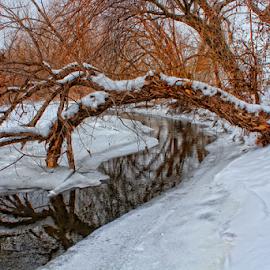 Snowy Creek by Robert D Brozek - Landscapes Prairies, Meadows & Fields ( water, winter, wood, tree, colorful, bright, ice, creek, bark, white, limb's, kansas, snow, cold,  )