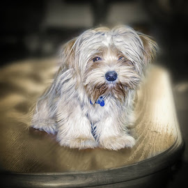 I can't help myself. She's just too cute... by Chandler McGrew - Animals - Dogs Portraits