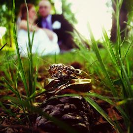 THE RINGS by Rena Spitzley - Wedding Bride & Groom ( macro, wedding photography, weddings, bride and groom, wedding rings,  )