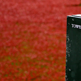 Poppies at the Tower of London by Donna Haigh - News & Events World Events