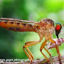 Robber fly~