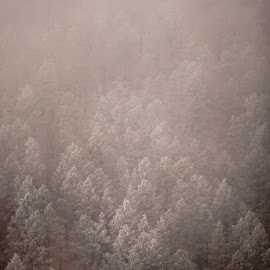 they are spoke so gentle by Bon Zeye - Landscapes Forests ( winter, cold, fog, frost, forest )