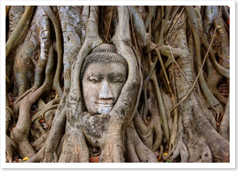 Buddha Head in Banyan Tree. Phra Nakhon Si Ayutthaya, Thailand