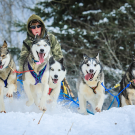 Brady and the Pack by Roberta Janik - Sports & Fitness Snow Sports