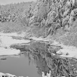 by Terry Dragon - Landscapes Forests ( black and white, b&w, landscape )