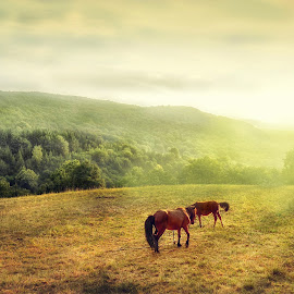 Horses in sunset by Staša Mirković - Landscapes Prairies, Meadows & Fields