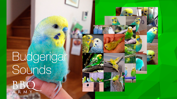 Screenshot of Budgerigar Sounds for Parakeet