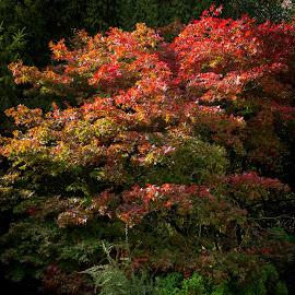 Autumn Colours by Darren Marshall - City,  Street & Park  City Parks ( colour, bench, park, autumn, trees )