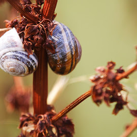 Sheldon and Shelley by Stuart Watson - Animals Other ( plant, snails, england, nature up close )