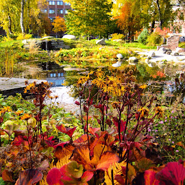 Autumncolors by Marianne Knudsen - City,  Street & Park  City Parks ( #autumn )