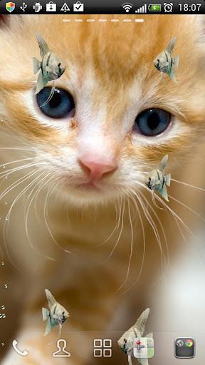 神仙鱼和小猫 动态壁纸