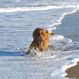 Life by Wayne Stocks - Animals - Dogs Running ( hooch stocks, morgan siocks, deborah cronin., wayne stocks, reece cronin )