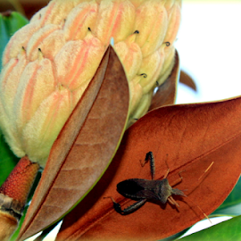 Visitor  by Elfie Back - Nature Up Close Leaves & Grasses ( leaf, insect, magnolia,  )