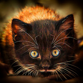 by Gaby Wernicke - Animals - Cats Kittens ( mouse, cozy, cat, kitten, wildlife, yellow, sun, soft, eyes, colours, cosy, nature, blue, whiskers, fur )