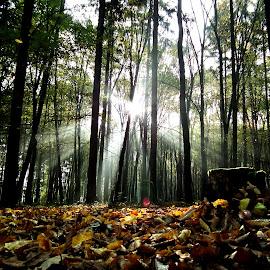 by Jiřina Rázková - Landscapes Forests