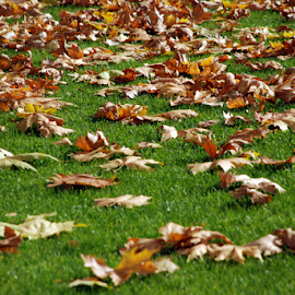 Autumn in the park by Gordana Nikolovska-Dimeska - Nature Up Close Leaves & Grasses ( abstract, lawn, park, colorful, green, yellowfalls, dry leaves, falling, yellow, leaf, macedonia, variety, nature, color, autumn, amber, background, outdoors, mowing, natural, lawn mowing, outside, sheet, green grass,  )