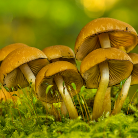 Fungi family in the moss by Peter Samuelsson - Nature Up Close Mushrooms & Fungi